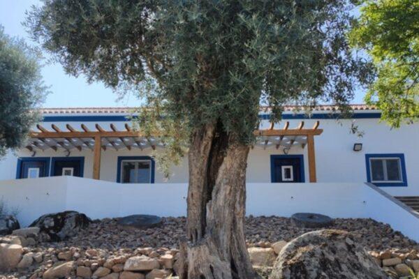 Almojanda 3 Olive Tree